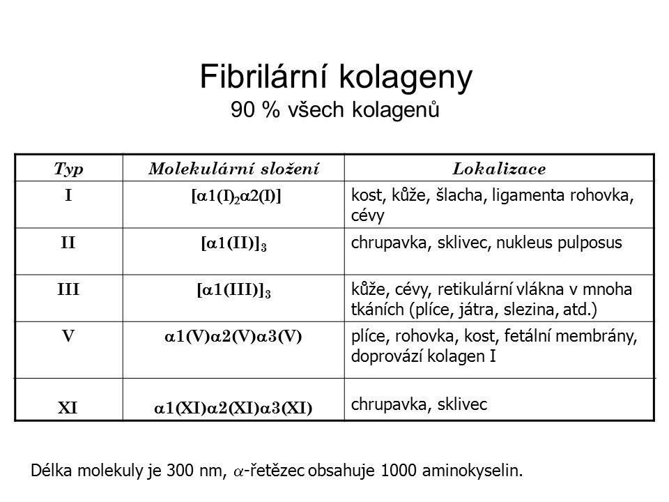 Fibrilární kolageny 90 % všech kolagenů Typ Molekulární složení