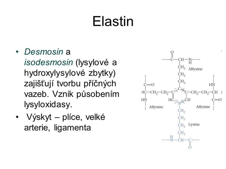 Elastin Desmosin a isodesmosin (lysylové a hydroxylysylové zbytky) zajišťují tvorbu příčných vazeb. Vznik působením lysyloxidasy.
