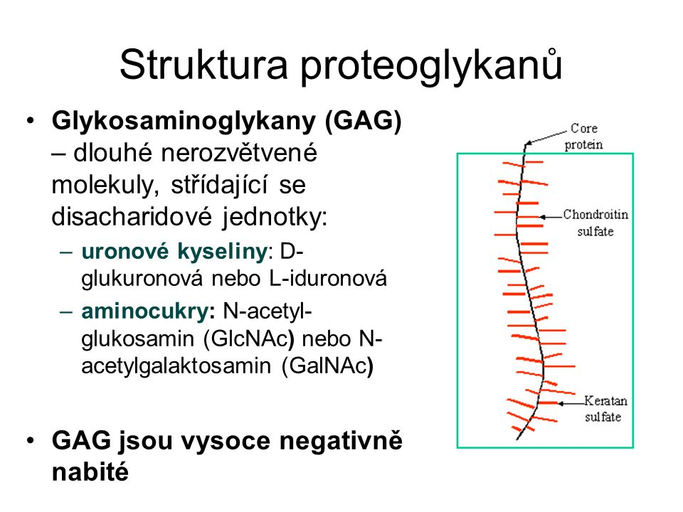 Struktura proteoglykanů