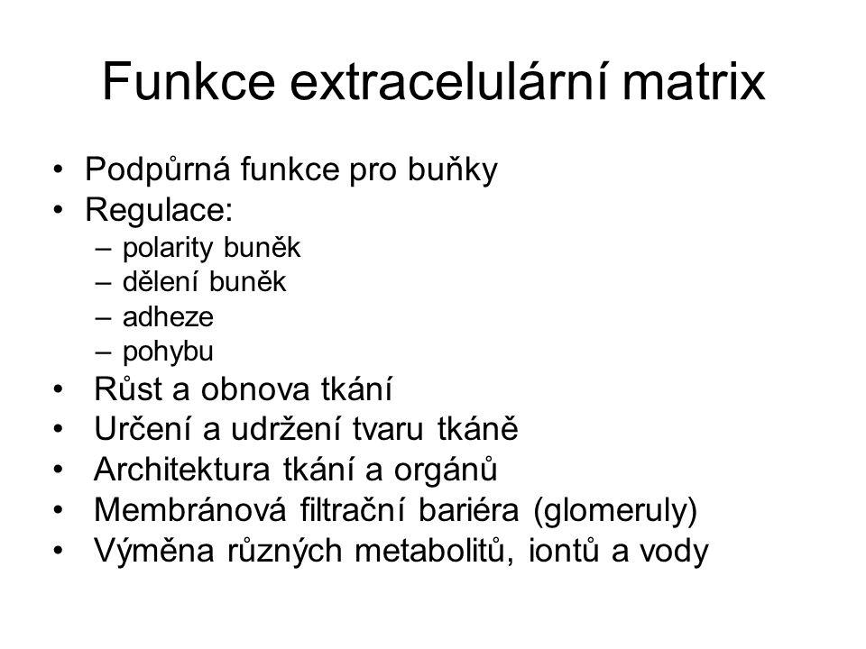 Funkce extracelulární matrix