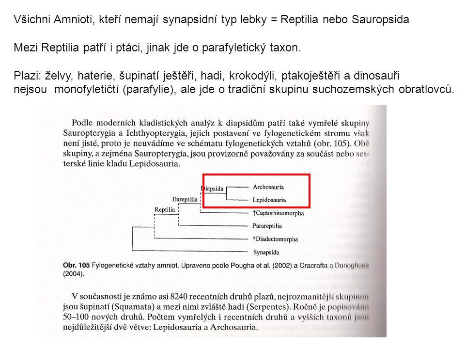 Všichni Amnioti, kteří nemají synapsidní typ lebky = Reptilia nebo Sauropsida