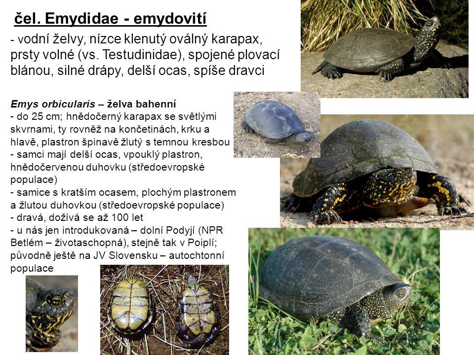 čel. Emydidae - emydovití