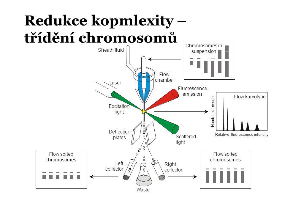 Redukce kopmlexity – třídění chromosomů Chromosomes in suspension