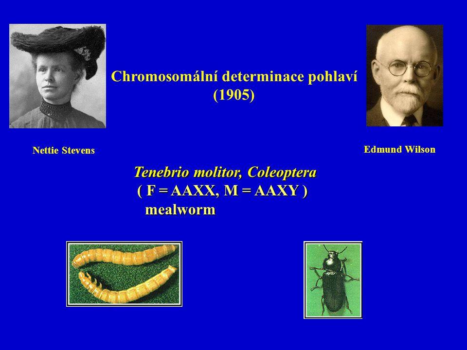 Chromosomální determinace pohlaví