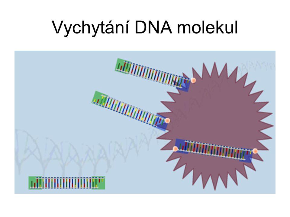 Vychytání DNA molekul