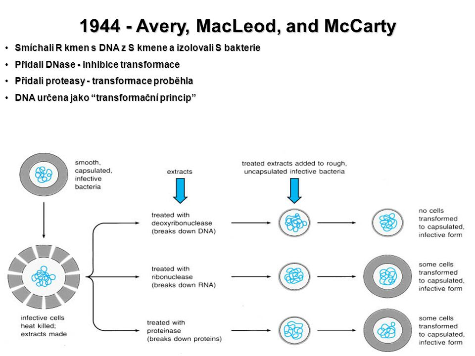 1944 - Avery, MacLeod, and McCarty