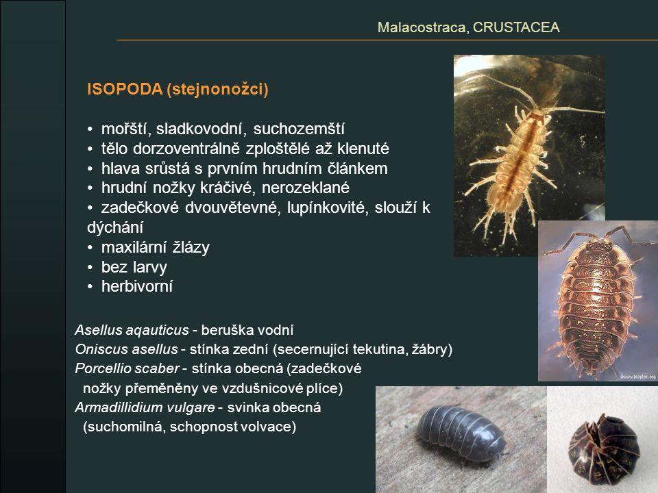 Malacostraca, CRUSTACEA