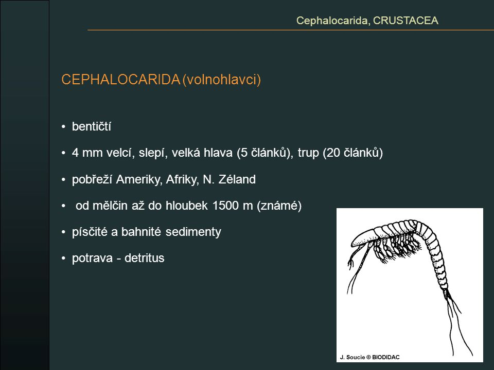 Cephalocarida, CRUSTACEA