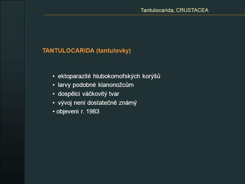 Tantulocarida, CRUSTACEA