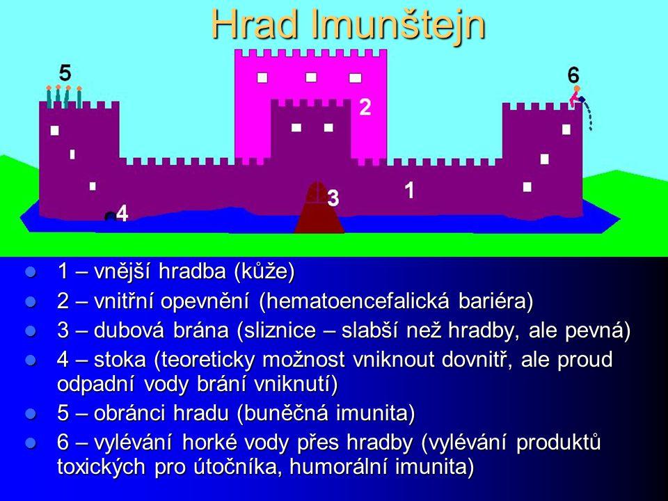 Hrad Imunštejn 1 – vnější hradba (kůže)