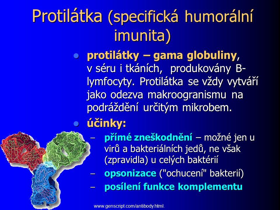 Protilátka (specifická humorální imunita)