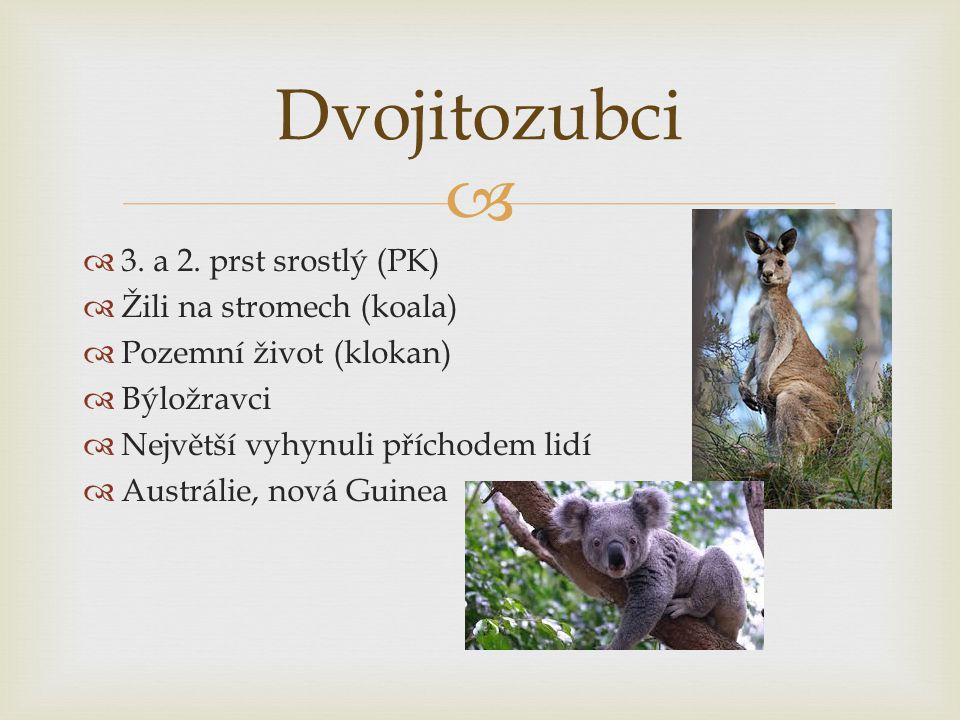 Dvojitozubci 3. a 2. prst srostlý (PK) Žili na stromech (koala)
