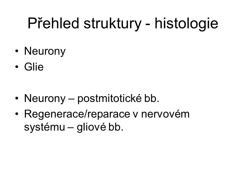 Přehled struktury - histologie