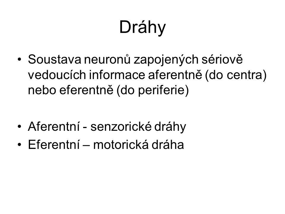 Dráhy Soustava neuronů zapojených sériově vedoucích informace aferentně (do centra) nebo eferentně (do periferie)