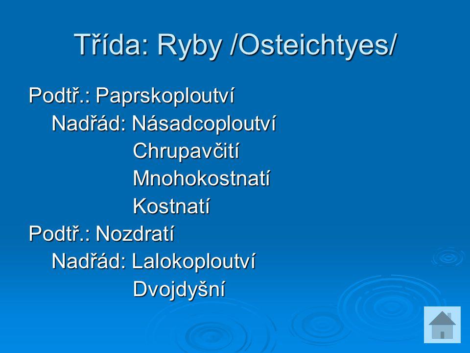 Třída: Ryby /Osteichtyes/