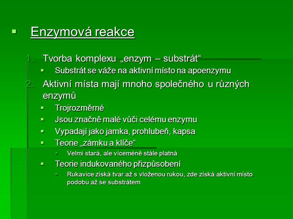 "Enzymová reakce Tvorba komplexu ""enzym – substrát"