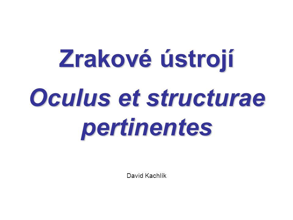Zrakové ústrojí Oculus et structurae pertinentes