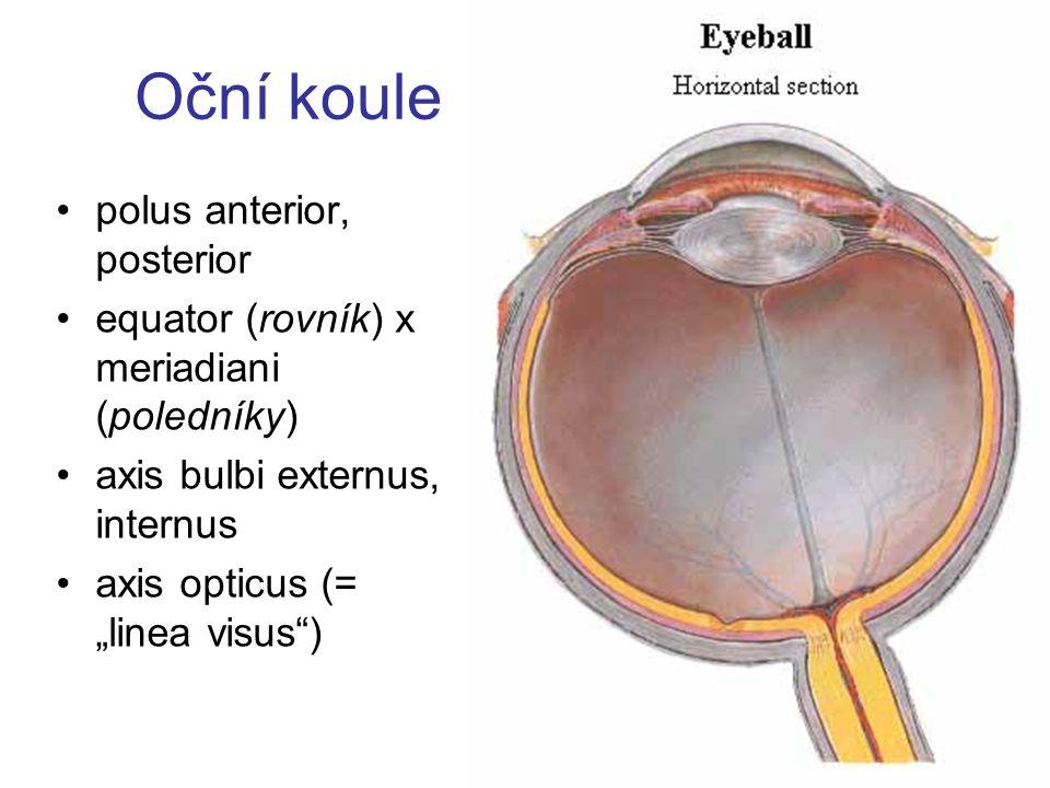 Oční koule polus anterior, posterior