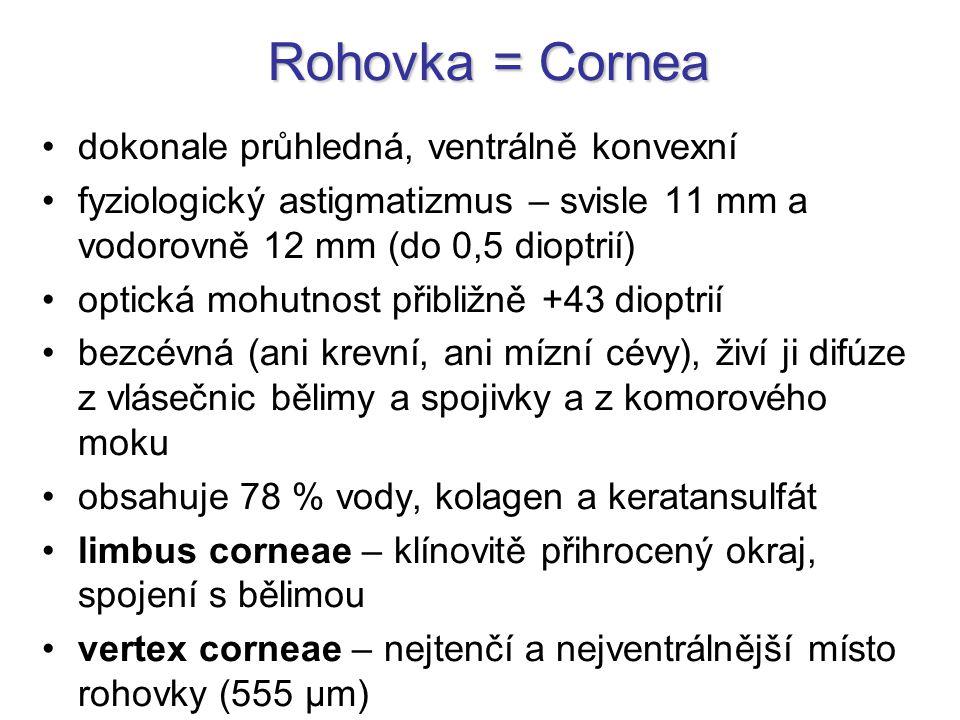 Rohovka = Cornea dokonale průhledná, ventrálně konvexní