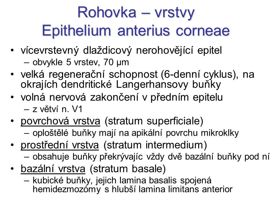 Rohovka – vrstvy Epithelium anterius corneae