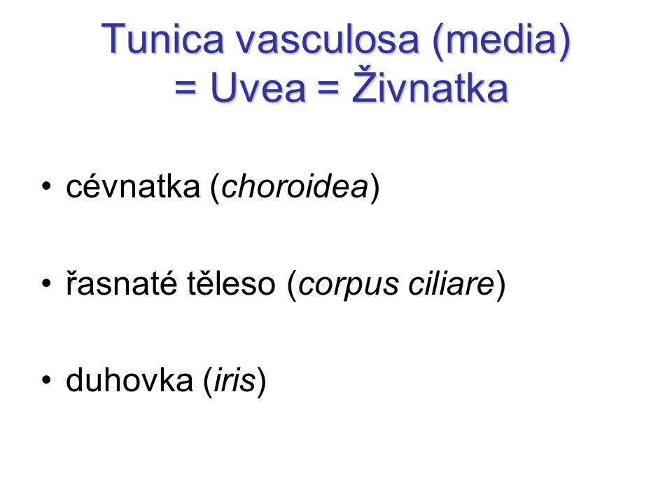 Tunica vasculosa (media) = Uvea = Živnatka