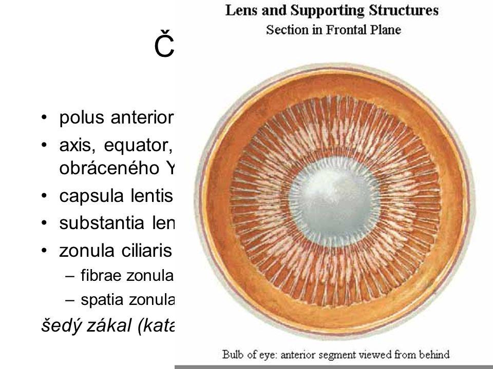 Čočka = Lens polus anterior, posterior