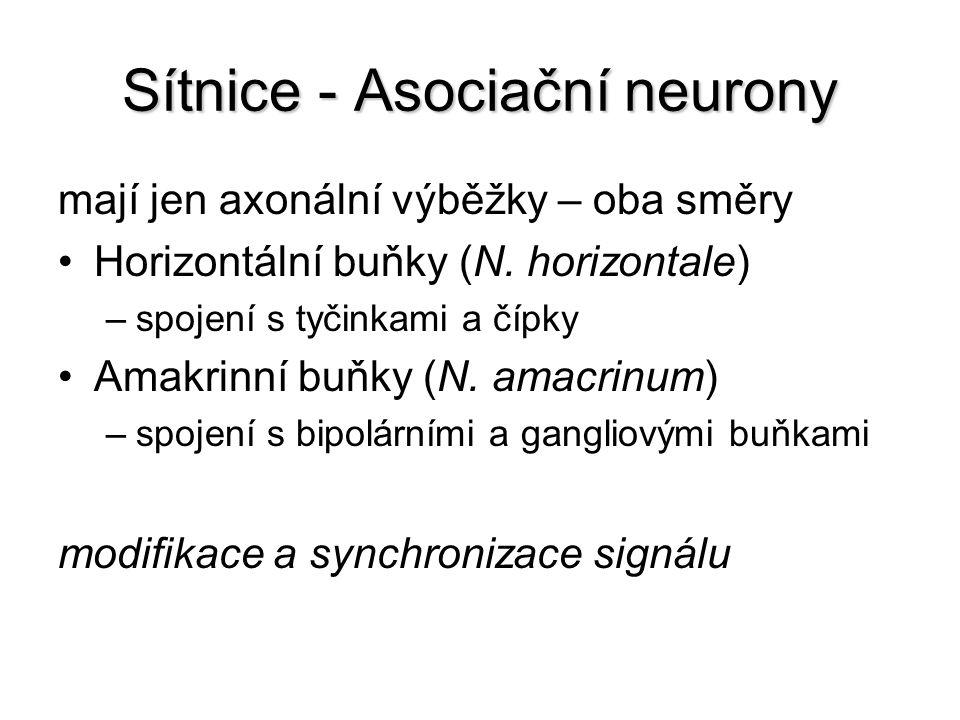Sítnice - Asociační neurony