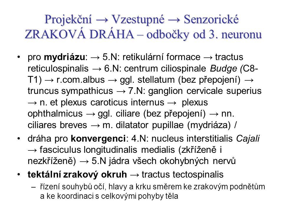 Projekční → Vzestupné → Senzorické ZRAKOVÁ DRÁHA – odbočky od 3