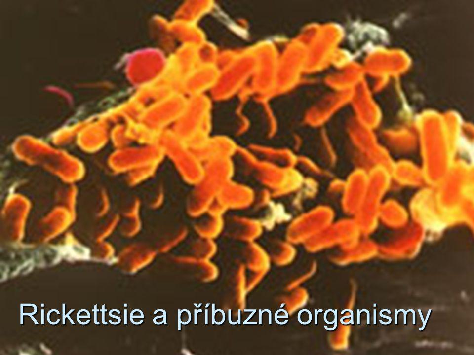 Rickettsie a příbuzné organismy