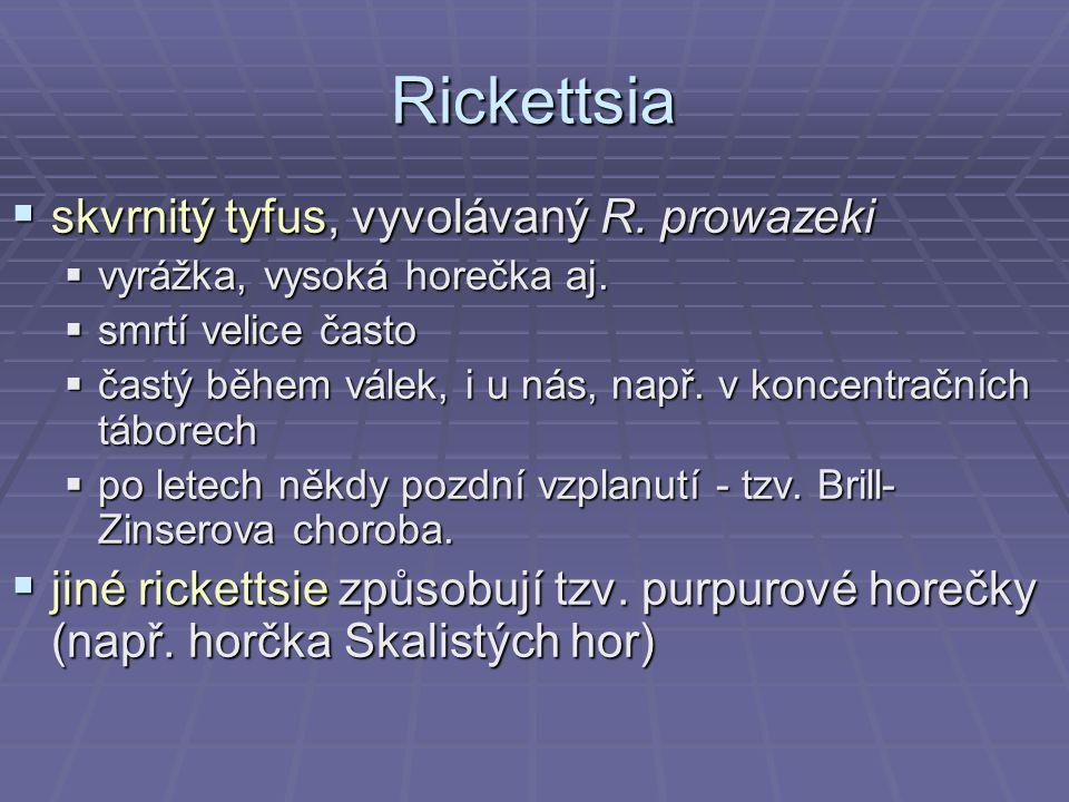 Rickettsia skvrnitý tyfus, vyvolávaný R. prowazeki