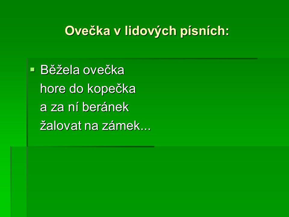 Ovečka v lidových písních: