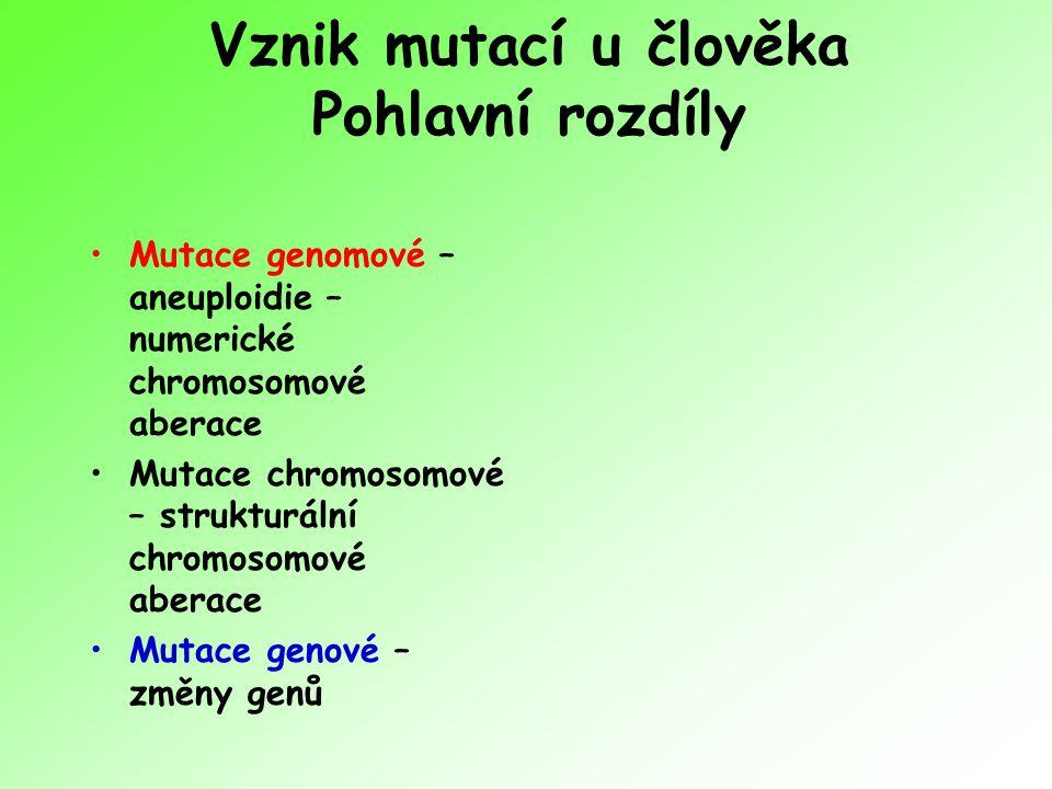 Vznik mutací u člověka Pohlavní rozdíly
