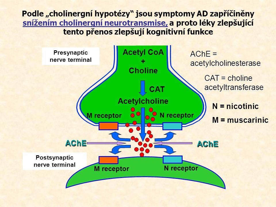 Presynaptic nerve terminal Postsynaptic nerve terminal