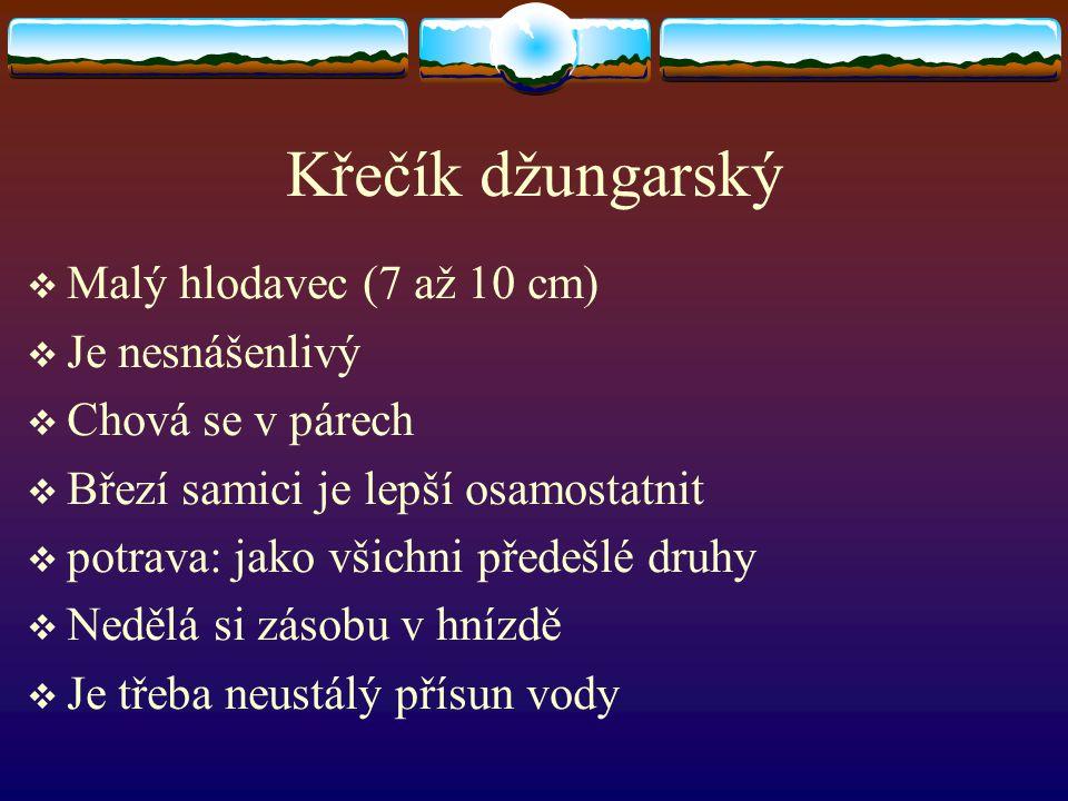 Křečík džungarský Malý hlodavec (7 až 10 cm) Je nesnášenlivý