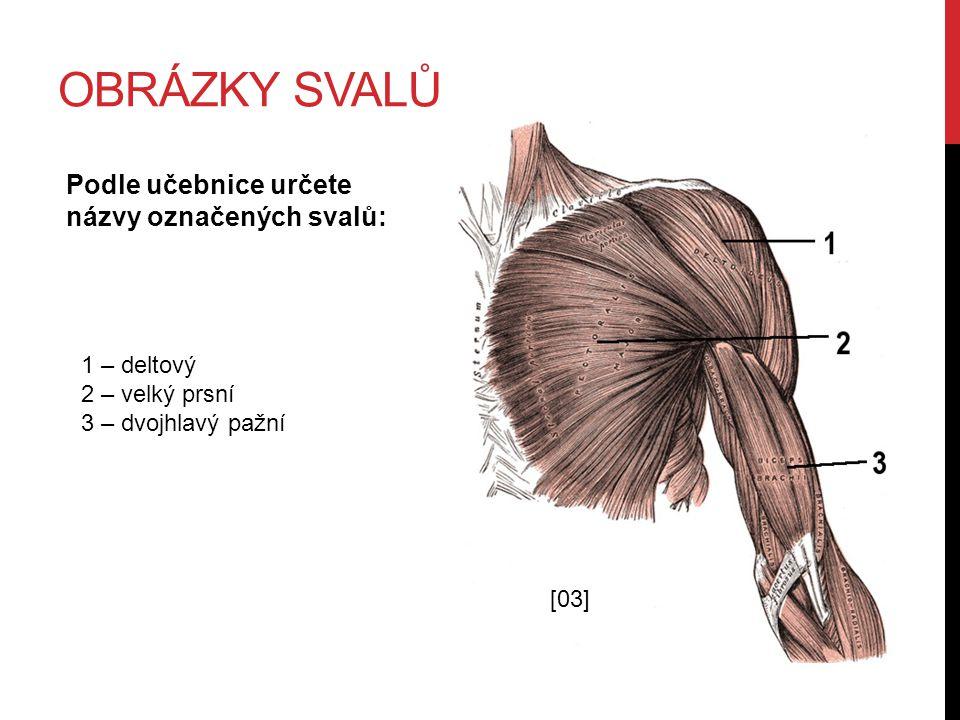 Obrázky svalů Podle učebnice určete názvy označených svalů: