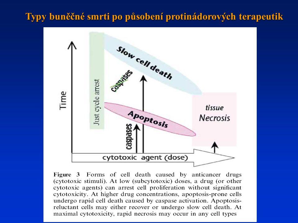 Typy buněčné smrti po působení protinádorových terapeutik