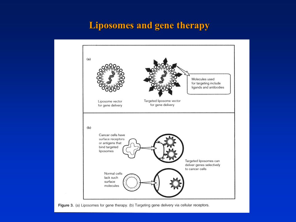 Liposomes and gene therapy