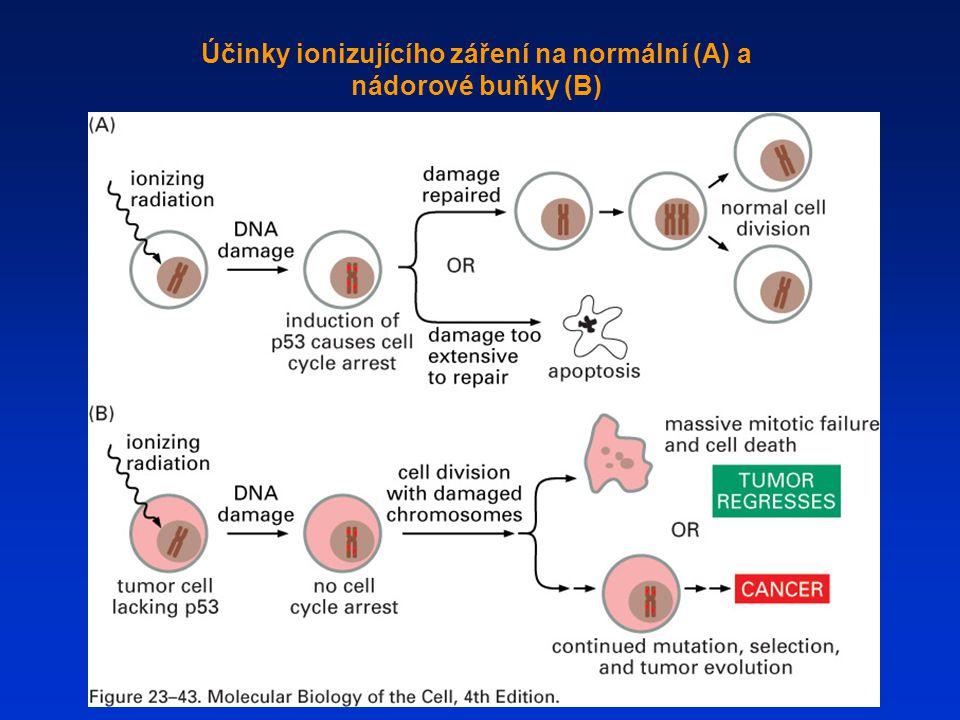 Účinky ionizujícího záření na normální (A) a nádorové buňky (B)