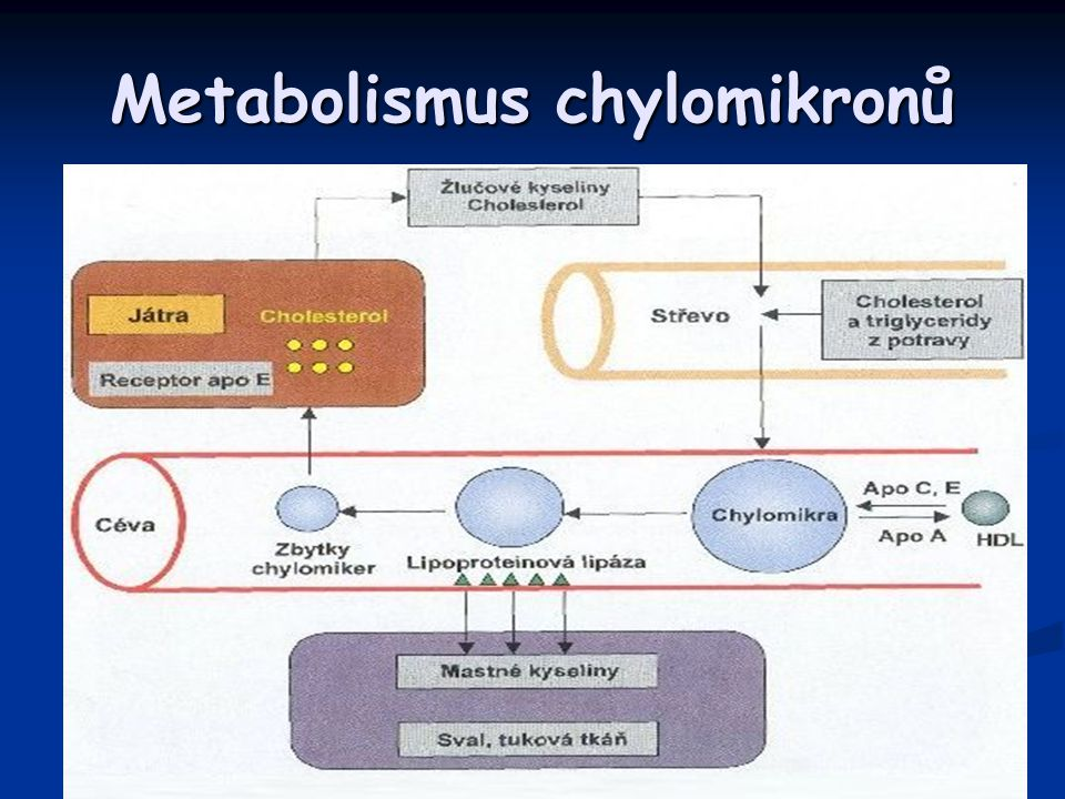 Metabolismus chylomikronů