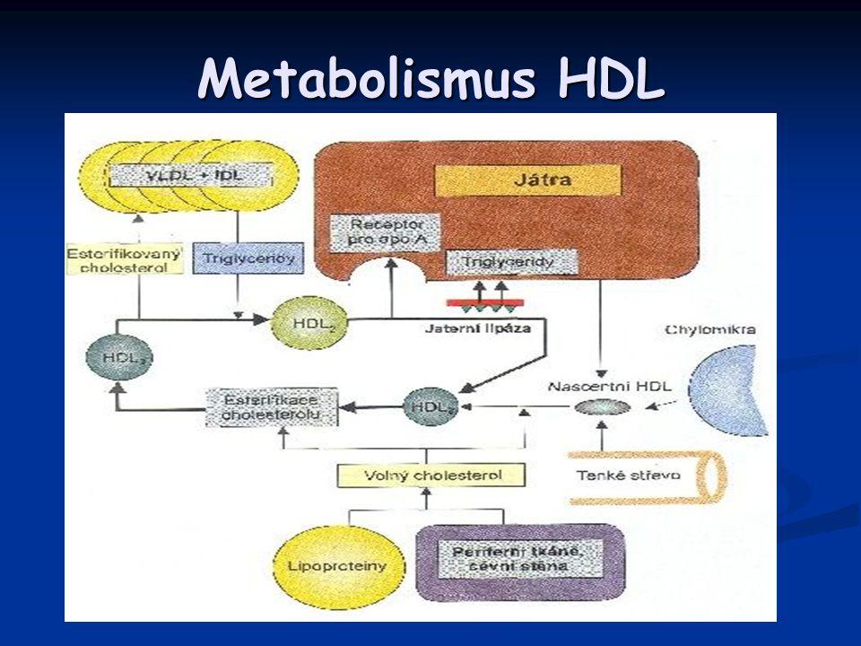 Metabolismus HDL