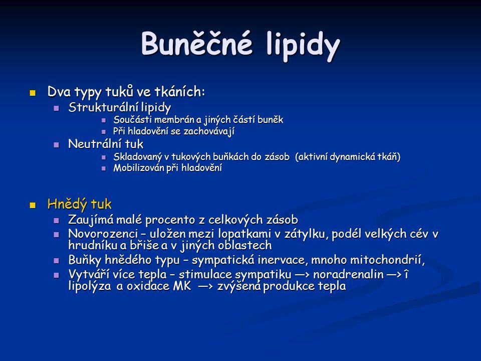 Buněčné lipidy Dva typy tuků ve tkáních: Hnědý tuk Strukturální lipidy