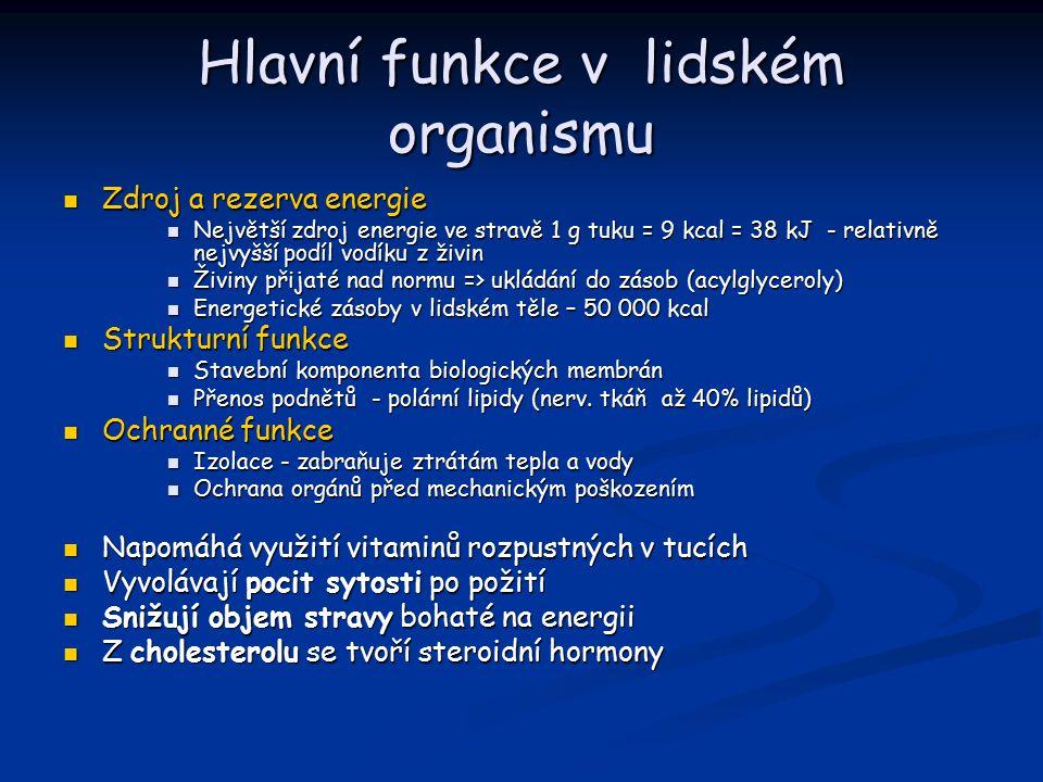 Hlavní funkce v lidském organismu