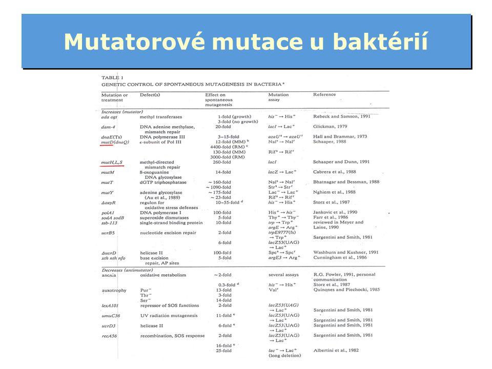 Mutatorové mutace u baktérií