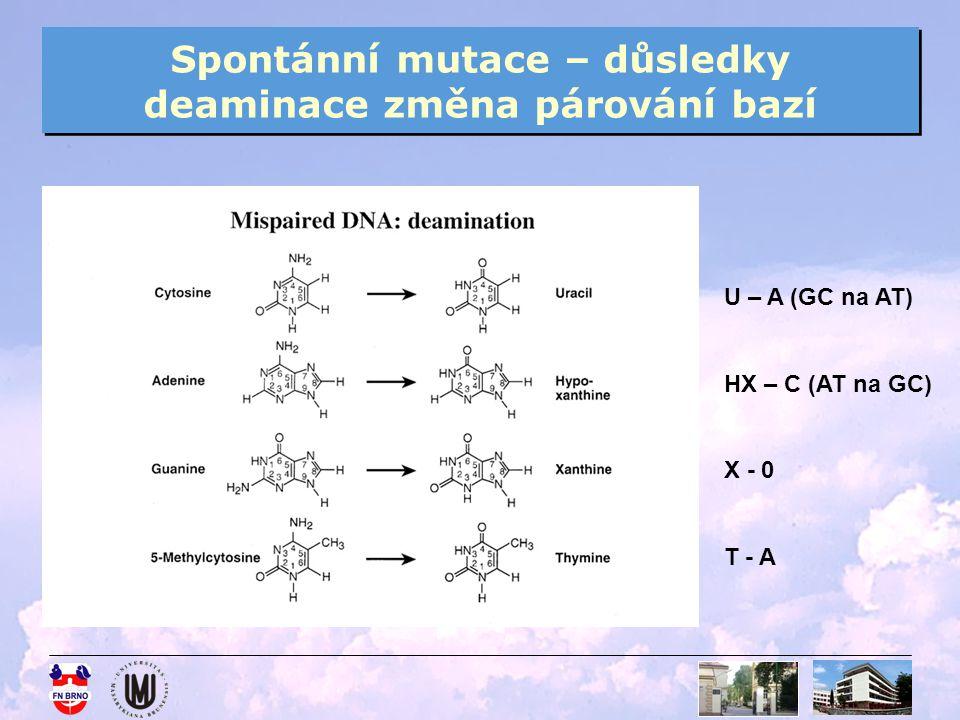 Spontánní mutace – důsledky deaminace změna párování bazí