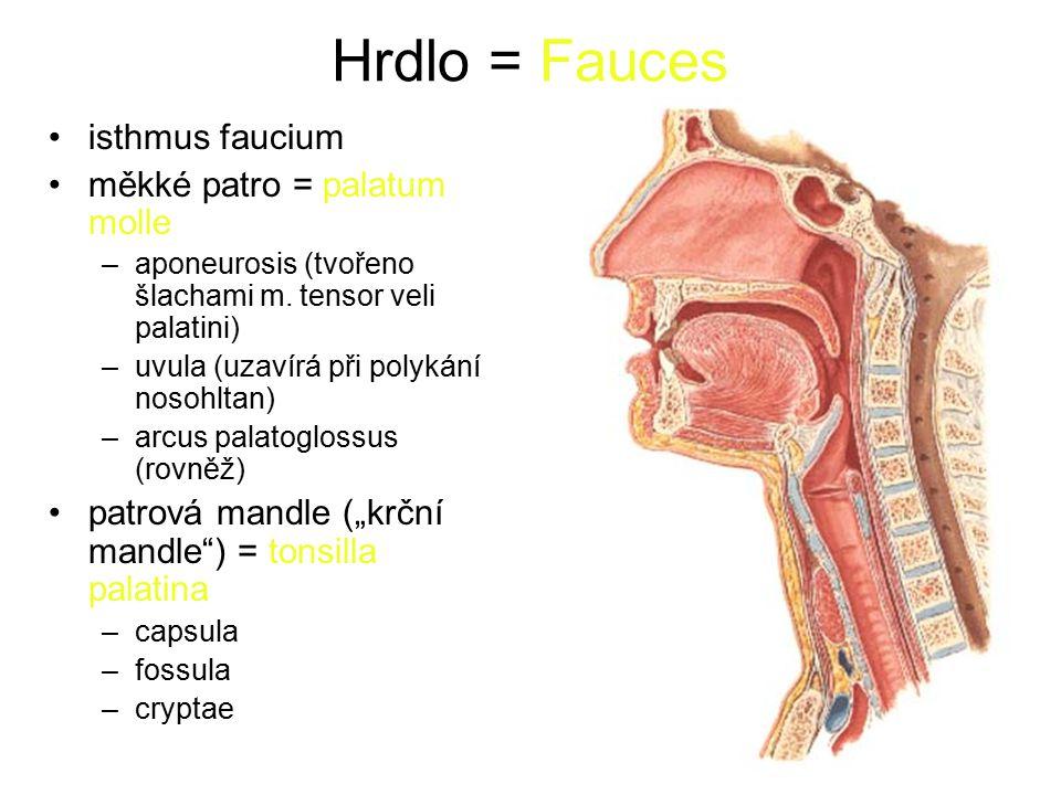 Hrdlo = Fauces isthmus faucium měkké patro = palatum molle