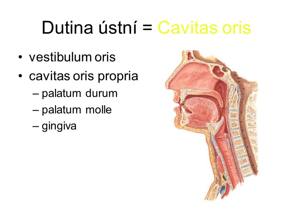 Dutina ústní = Cavitas oris