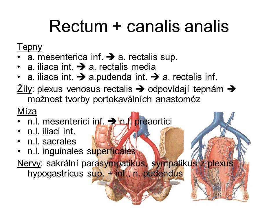 Rectum + canalis analis