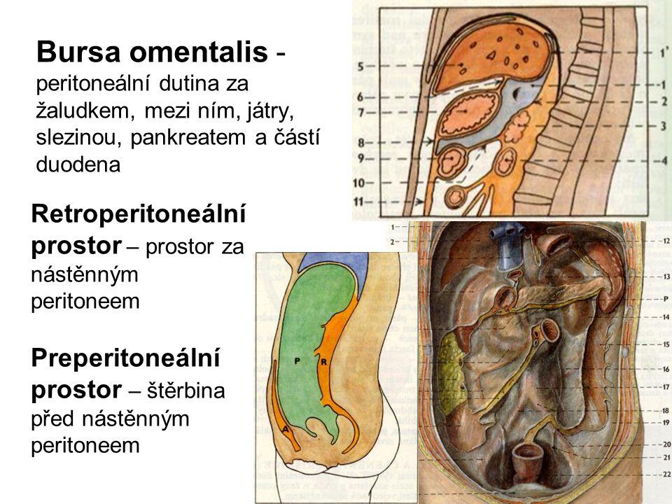 Bursa omentalis - peritoneální dutina za žaludkem, mezi ním, játry, slezinou, pankreatem a částí duodena
