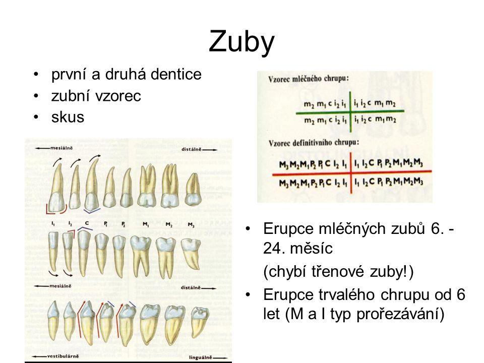 Zuby první a druhá dentice zubní vzorec skus