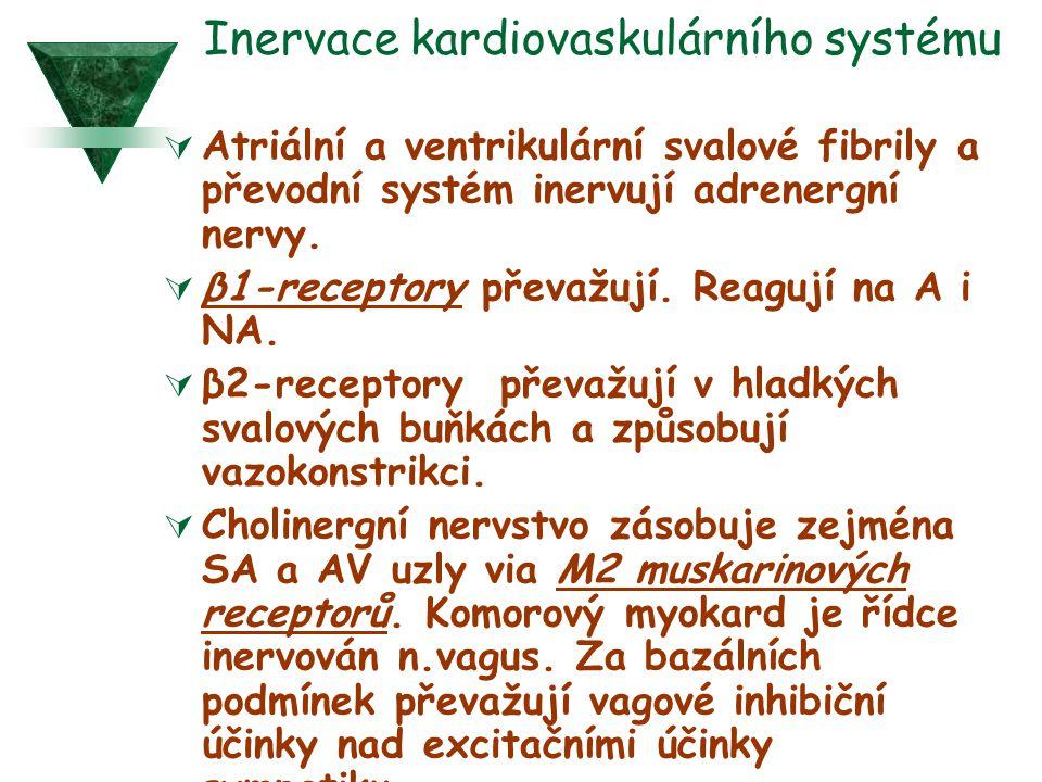 Inervace kardiovaskulárního systému